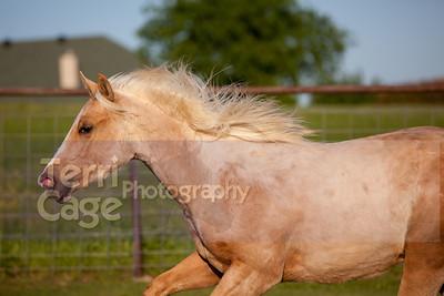 Triple J Quarter Horses