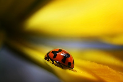 Nature - Ladybirds