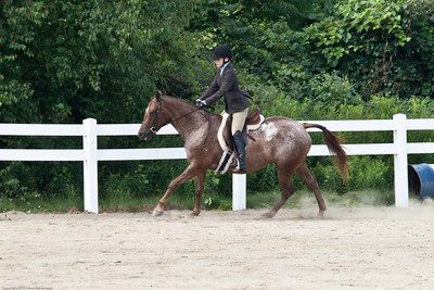 Wyoming County Roundup Hunter Hack Ponies