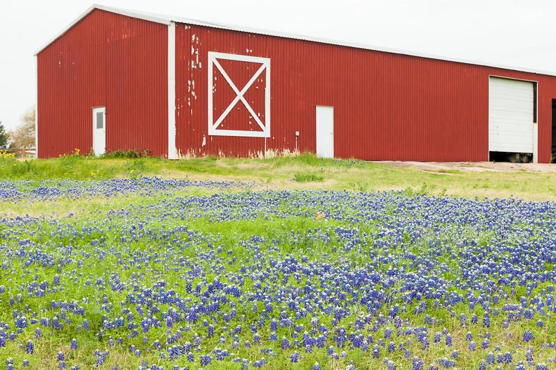 2015_4_3 Texas Wildflowers-7529-3.jpg