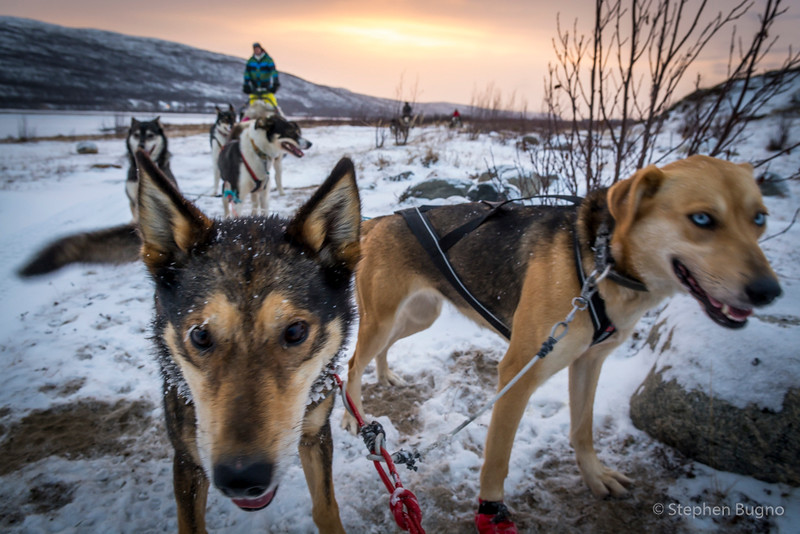 Dog Mushing-9873.jpg