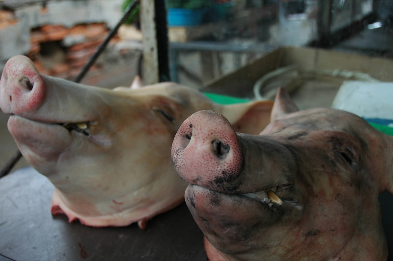 Pig Heads at Telavi Market - Kakheti, Georgia
