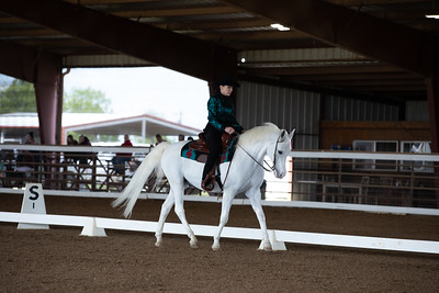 Horse 118