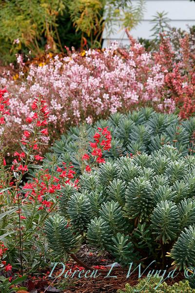Euphorbia - Gaura - mediterranean garden_2452.jpg