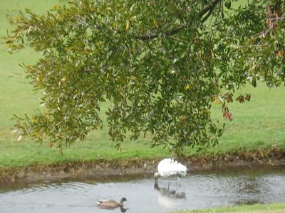 Nature shots at Villas de Golf