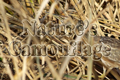 Nature's Camouflage