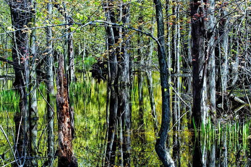 Sunny swamp.jpg