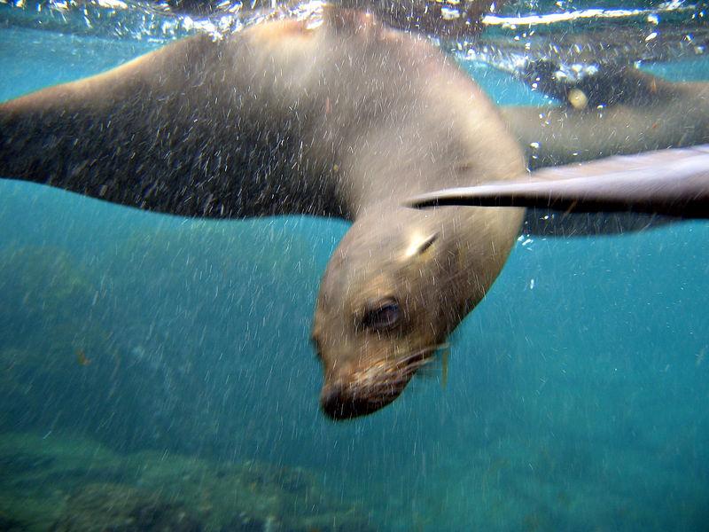 Here comes a sea lion   (Dec 11, 2005, 08:07am)
