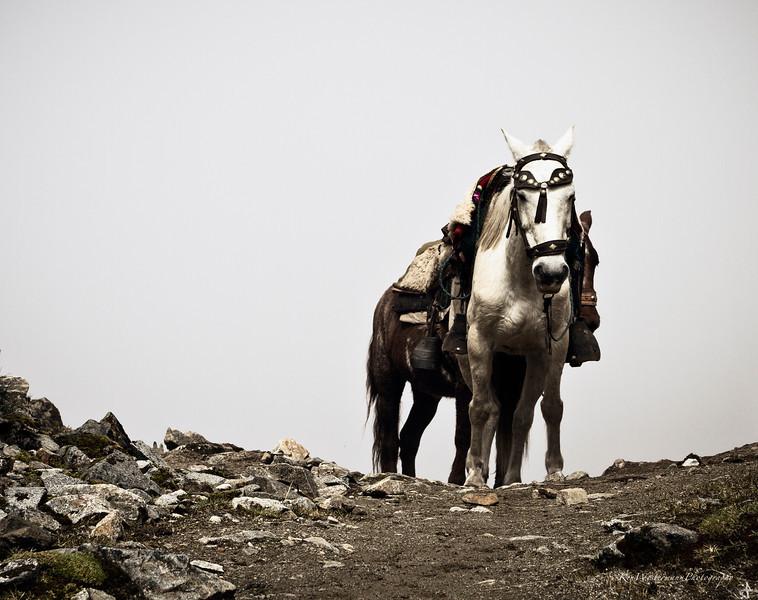 The White Horse