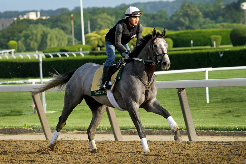 Tacitus (Tapit) trains for the Belmont Stakes (Gr I) at Belmont Park 6/7/19. Trainer: Bill Mott. Owner: Juddmonte Farms, Inc.