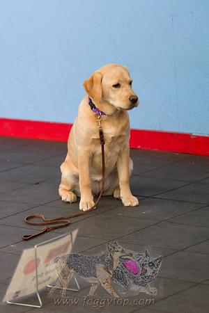 January 2017 - Golden Rule School For Dogs WCRL Trial