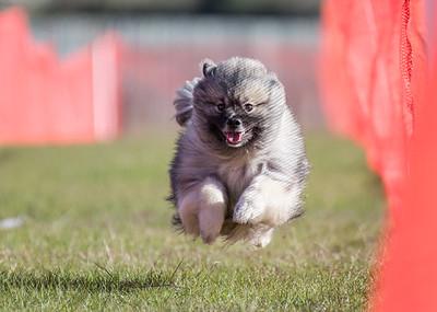 Pensacola Dog Fanciers FastCAT Jan4-6, 2019