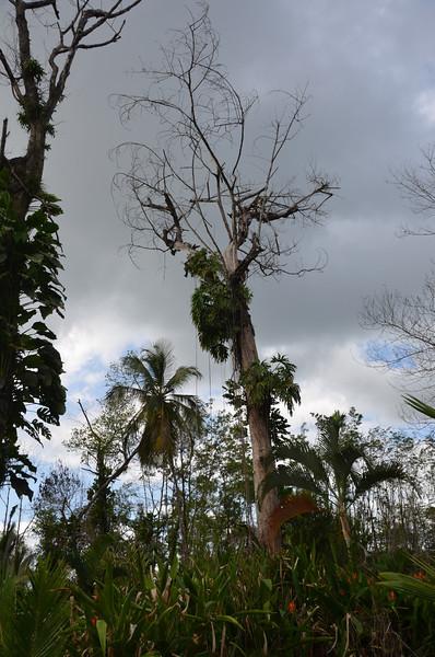 Bocas del Toro Boat Tour 25.jpg