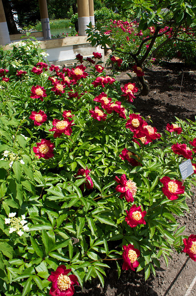 2013-06-15_Botanical~012.jpeg