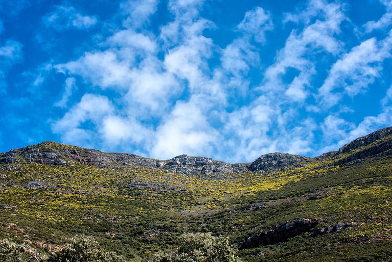 2014-08Aug26-Capetown-S4D-73.jpg