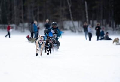 Tamworth Dog Sledding