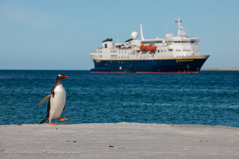 Antarctic-199