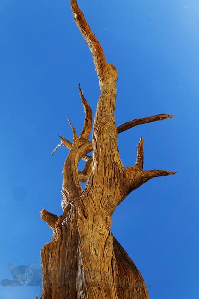 Deadvlei - Dead or Petrified Tree