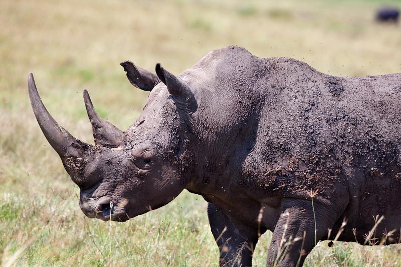 Rhino _MG_8374.jpg