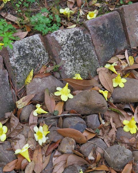 fallen blossoms.JPG