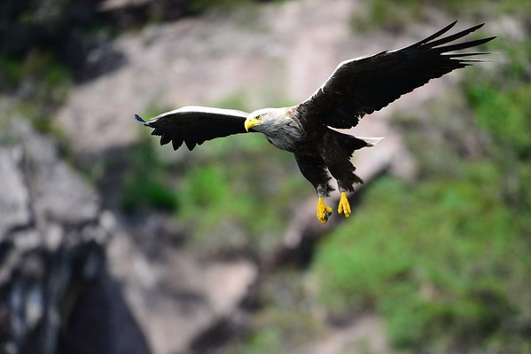 Eagle safari in a fjord on the west coast of Norway