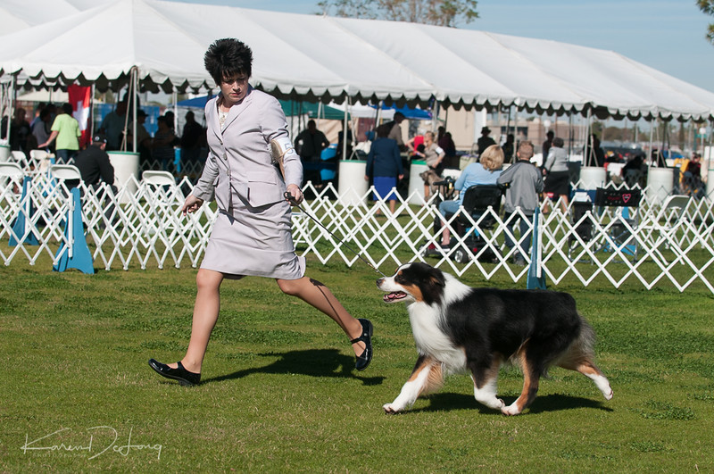20170205_Australian Shepherds_Lost Dutchman Kennel Club-65.jpg