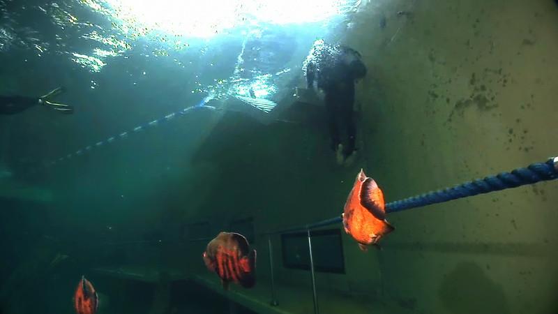 Underwater Walk Edit 45secs.00_01_01_18.Still074.jpg