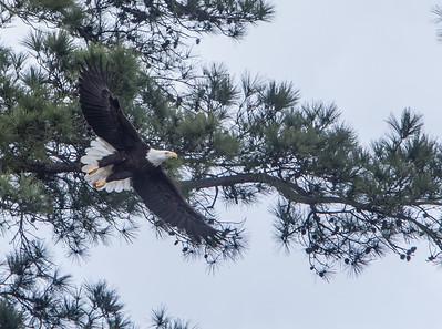 Woodlands Eagles