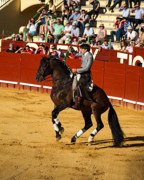 Bullfighting H3.jpg