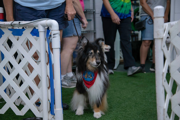 Cross Roads Canine Senior Parade 2018
