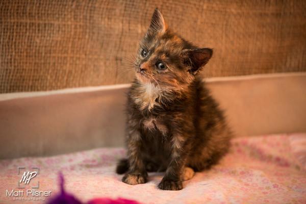 LAW Kittens June 2016