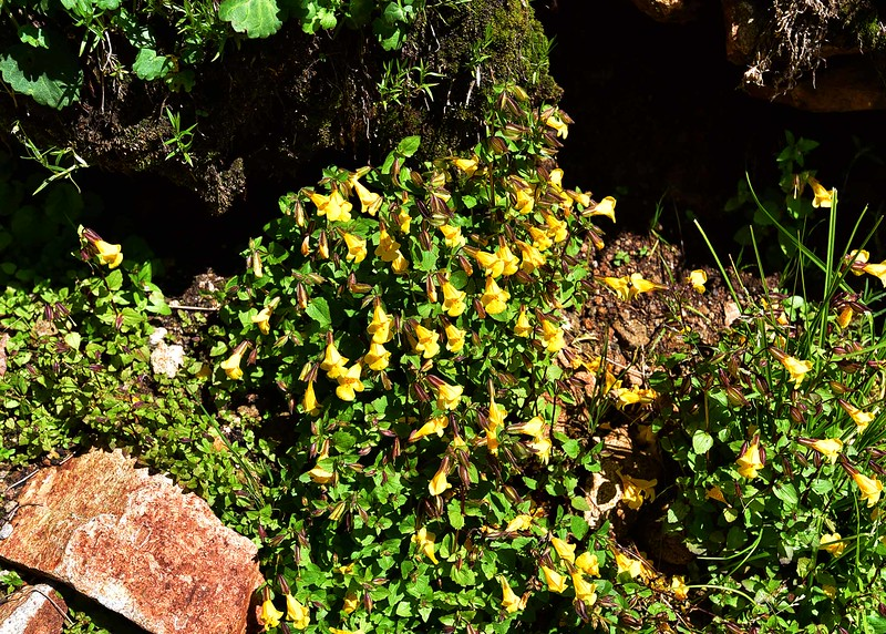 NEA_0397-7x5-Flowers at Ice Spring.jpg