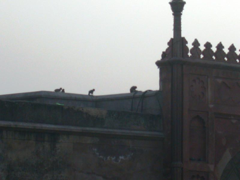 Agra (54).JPG