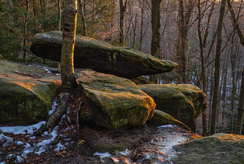 Forest Portrait: The Ledges    Cuyahoga Valley National Park