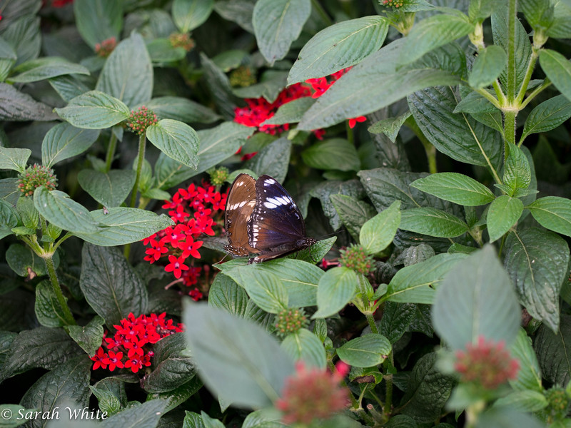 140503_ButterflyHouse_465.jpg