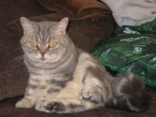 Lots of Misc Pet Photos 2005-2008