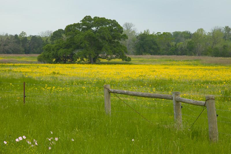 2015_4_3 Texas Wildflowers-7561-2.jpg