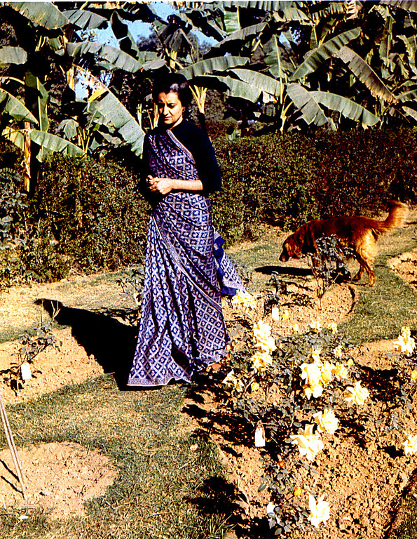 . Indira Gandhi walks through her garden at home in India in 1960.  A skilled politician, the 48-year-old widow was elected prime minister of India on Jan. 19, 1966, to lead her poor, overpopulated country on a democratic course.  A dominant force on the Asian political scene, she was the only child of India\'s first prime minister, Jarwaharlal Nehru.  Prime Minister Indira Gandhi was assassinated on Oct. 31, 1984 by two of her Sikh bodyguards because of the slaughter of religious separatists at the Golden Temple at Amritsar, a Sikh shrine. Her son, Rajiv Gandhi,  was  then sworn in as India\'s prime minister. (AP Photo)