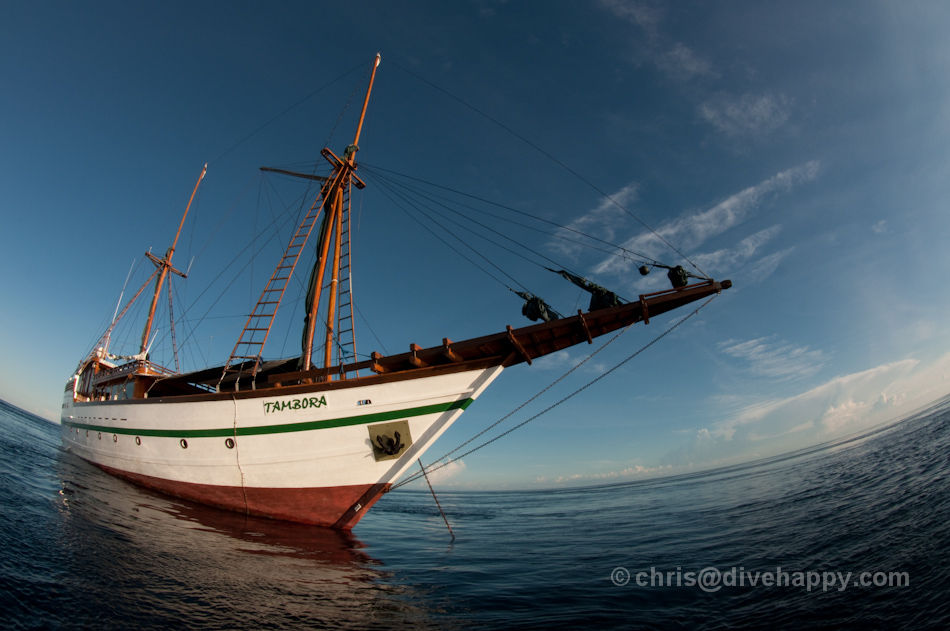 Tambora Liveaboard © Chris Mitchell