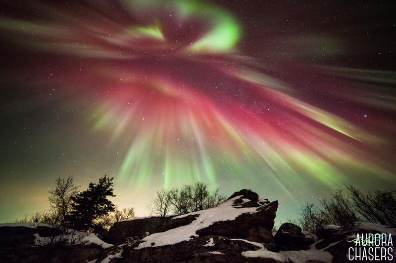 Aurora Love