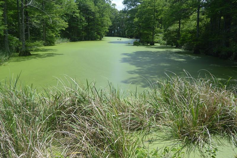 054 Swamp Near Walnut Lake.JPG