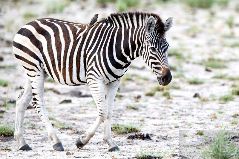 Botswana-20121129-4520-Edit.jpg