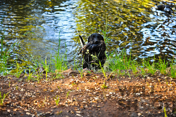 Spike (pond)