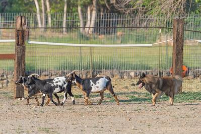 #2 PT Goats