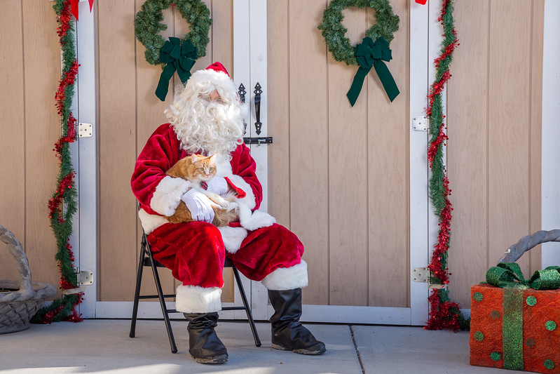 Pet Pictures With Santa-39.jpg