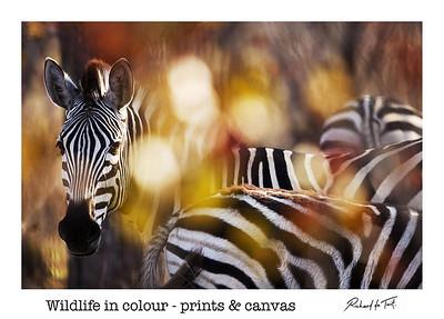 Wildlife Prints & Canvas