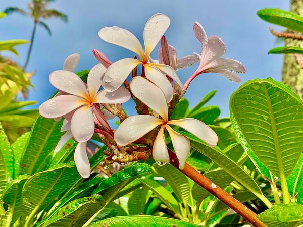 Flowers on Maui
