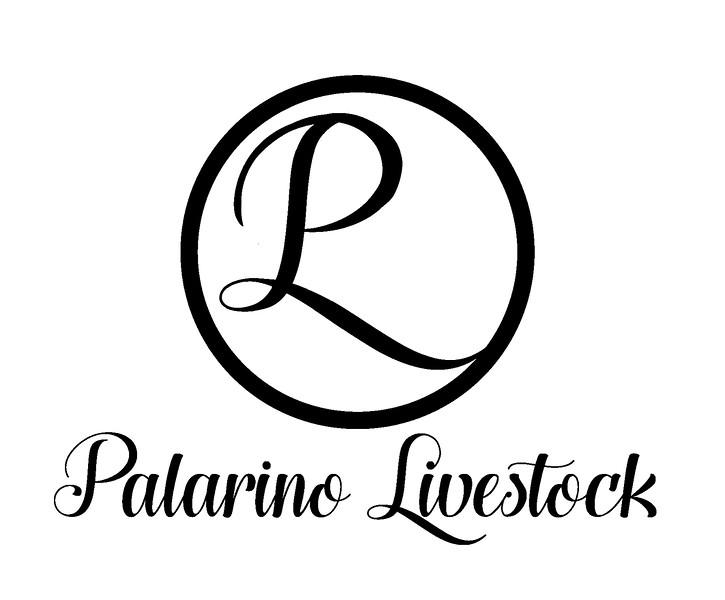 palarino_cursive