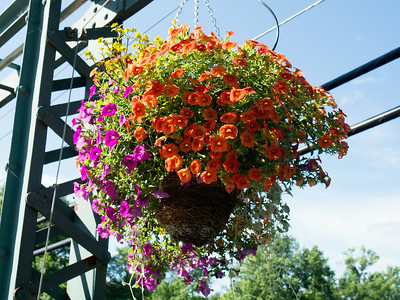 Flower Bridge_June 27, 2014