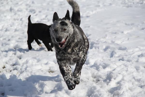 Josh & Alison's Pups